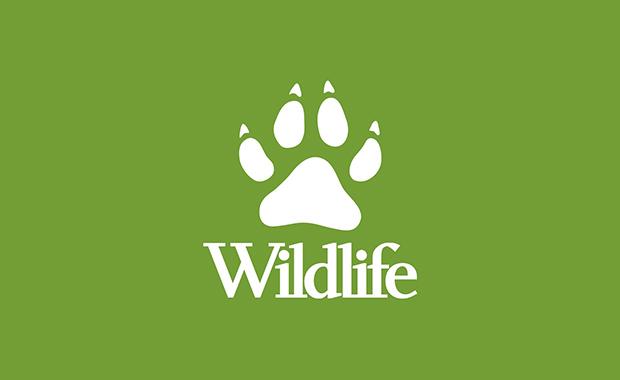 BBC-Wildlife-Magazine-Camera-trap-Photo-of-the-Year-2013