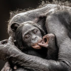 Graham-Mcgeorge-National-Geographic-Traveler-Photo-Contest-2013