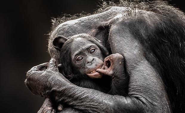 Graham-Mcgeorge-National-Geographic-Traveler-Photo-Contest-2013