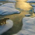 Sepp-Friedhuber-Global-Arctic-Awards-2012