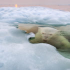 Paul-Souders-Grand-Prize-Winner-2013-National-Geographic-Photo-Contest