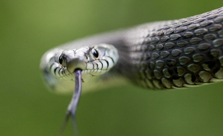 Marc-Montes-Finalist-2014-Wildlife-Photographer-Of-The-Year-Competition