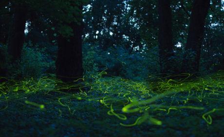 Imre-Kovacs-Fireflies-Swarming-TransNatura-2014-Grand-Prize-Winner