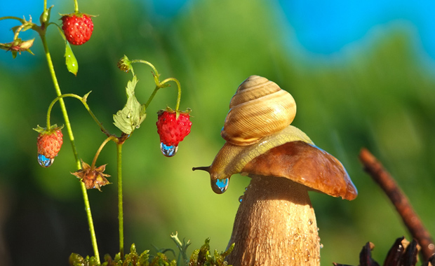 Magical-World-Snails-Vyacheslav-Mishchenko-IPA-2014-Discover-Year