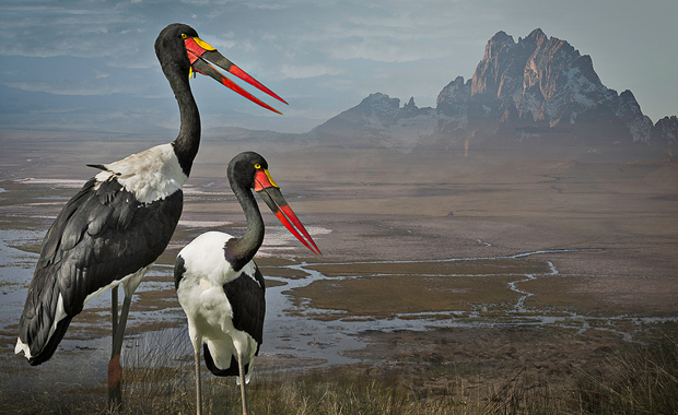 Cheryl-Medow-Saddle-Billed-Storks-Finalist-Print-Center-89th-Competition