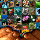 World-Wildlife-Day-2016-Poster-Design-Contest