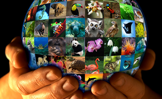 World-Wildlife-Day-2016-Poster-Design-Contest