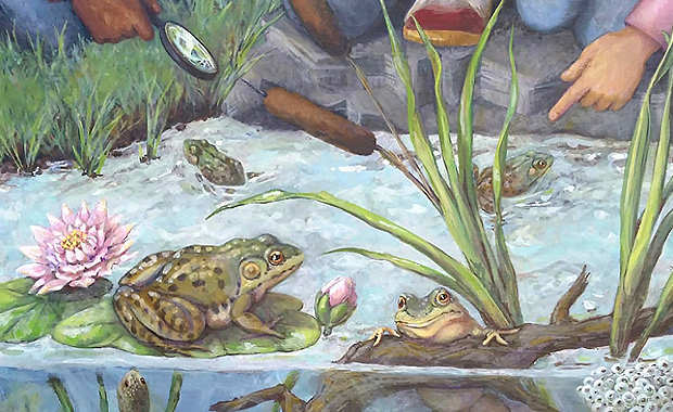 Frog-Study-Casey-Alexander-Southard-NAVS-Art-for-Animals-Contest