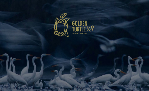 Golden-Turtle-2018-Wildlife-Art-Photography-Festival-Competition