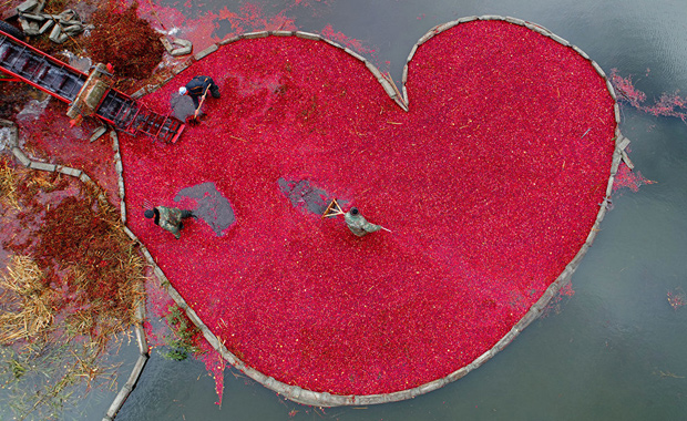 Sergei-Gapon-Cranberry-heart-2018-Andrei-Stenin-Photo-Contest-Winner