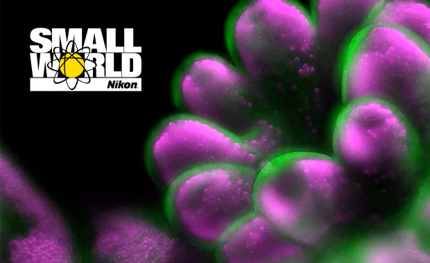 Nikon-Small-World-2020-Photomicrography-Video-Competition