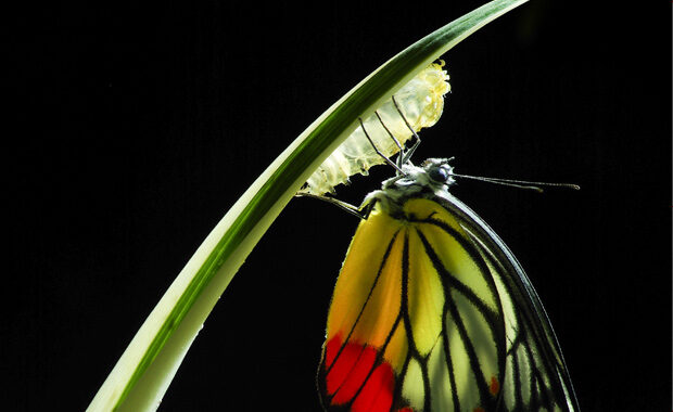 Royal-Society-of-Biology-Photography-Competition-2020