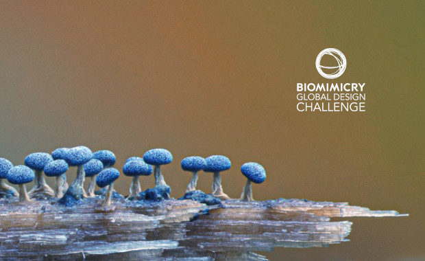 Biomimicry-Global-Design-Challenge-2021-Competition